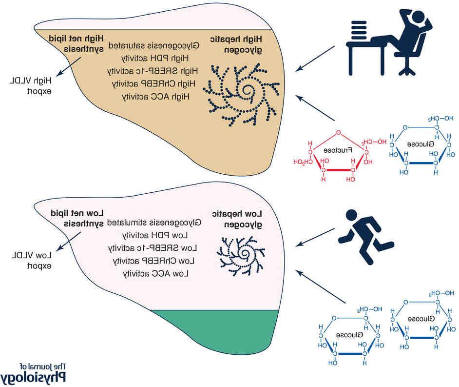 Comment reconstituer ses réserves de glycogène