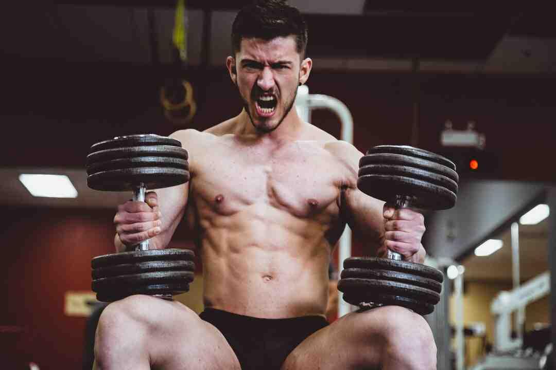 Programme musculation 3 fois par semaine pdf